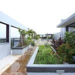 Terrace Garden - Silver Linden
