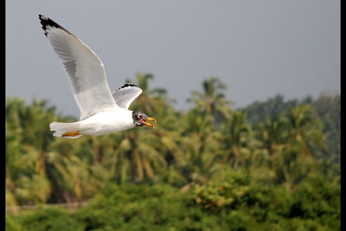 Kadalundi Bird Sanctuary - Malabar Developers